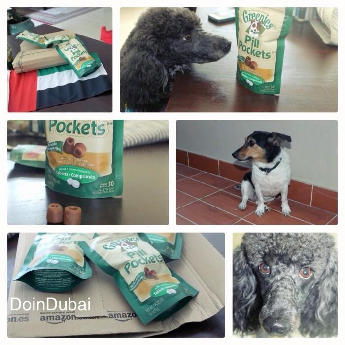 DISTRESSED DOGS IN DUBAI