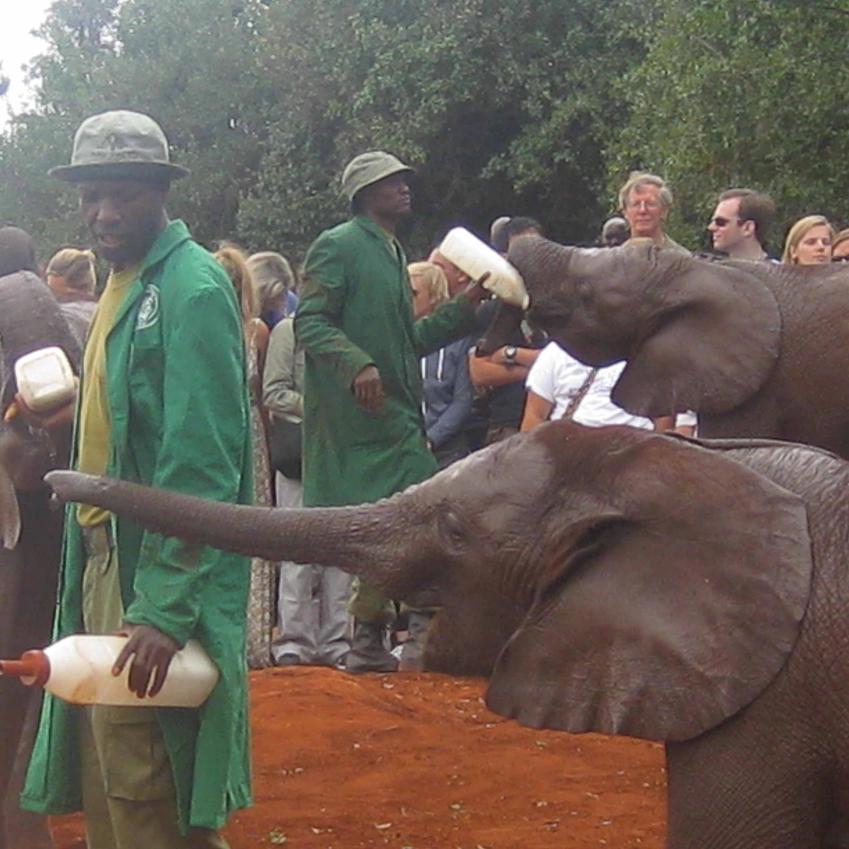 NAIROBI SHELDRICK ELEPHANT ORPHANAGE