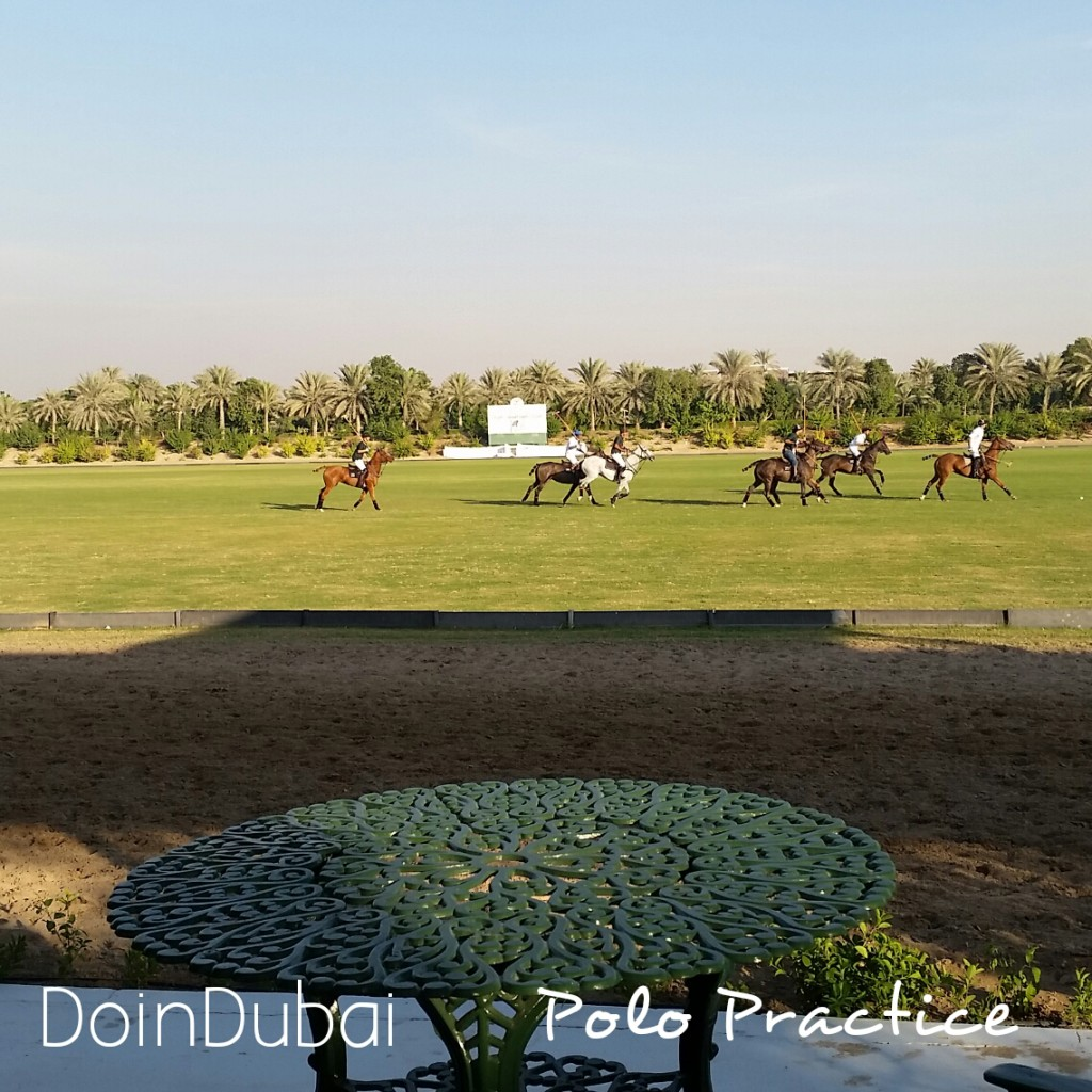 Desert_Palm_Polo