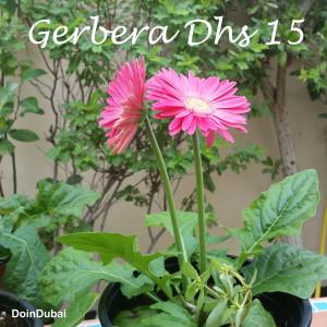 DUBAI GARDENING PROJECT PLANT SHOPPING