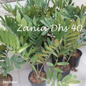 Dubai Gardening Zania