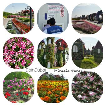 Miracle_Garden