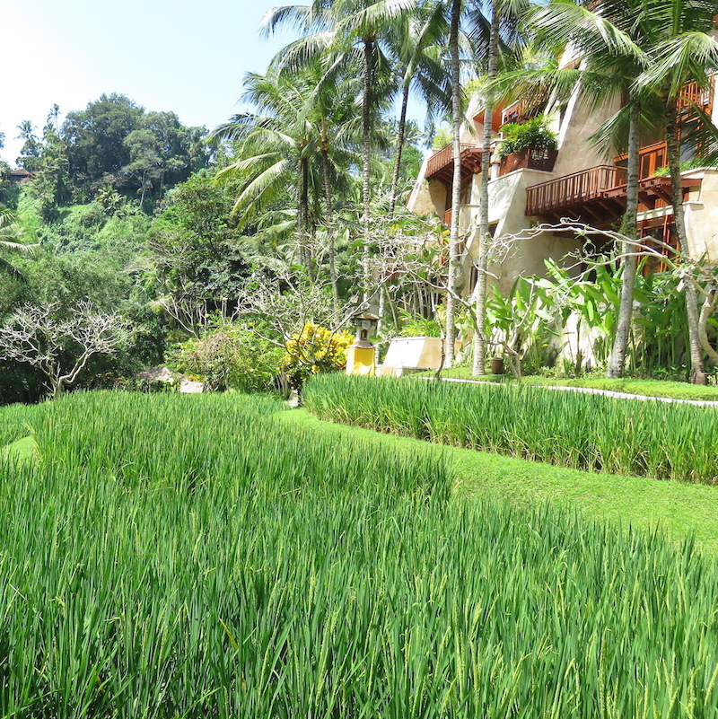 Bali Hotels DoinDubai Four Seasons Room Sayan