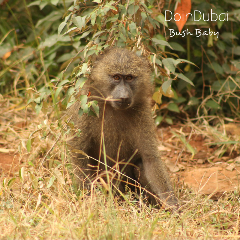Safari Packages Kenya Baby Baboon DoinDubai