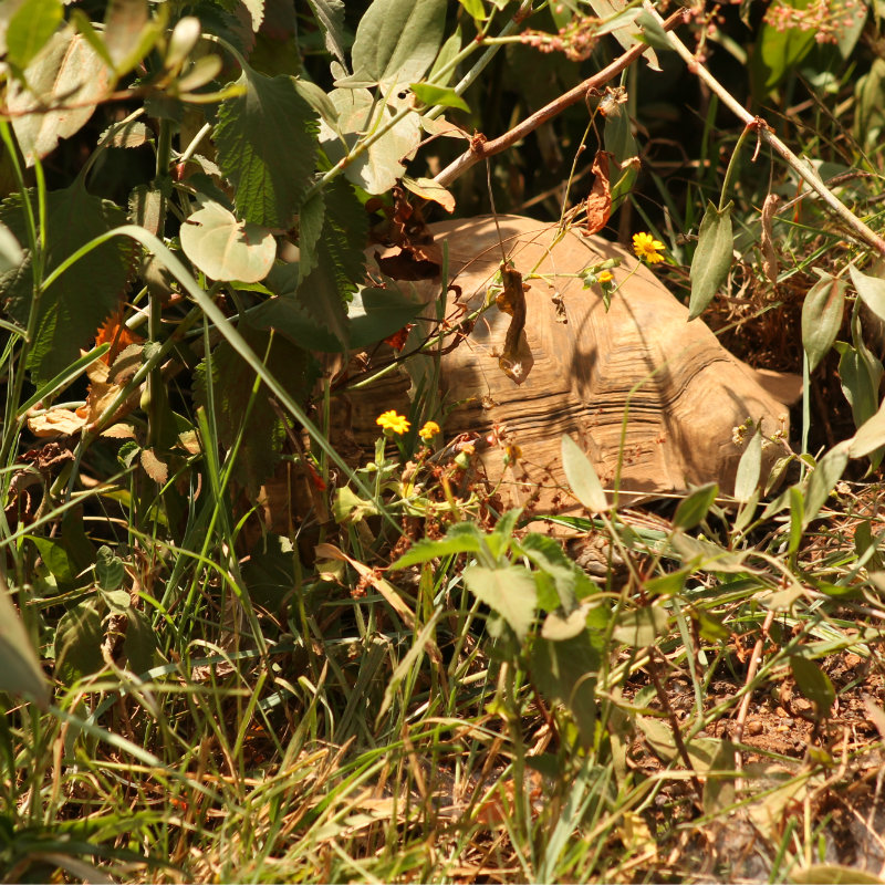Safari Tortoise Nairobi Tented Camp