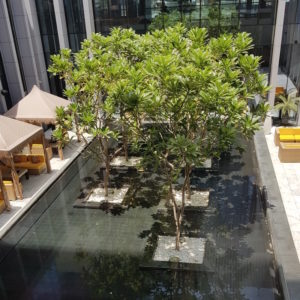 Image ofOBEROI DUBAI FACIAL DoinDubai Courtyard