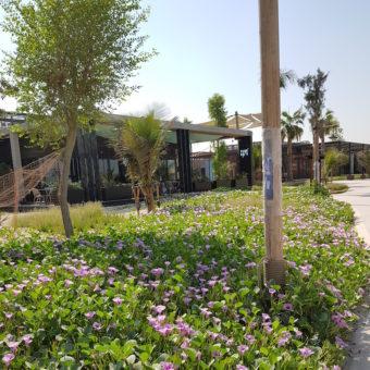 Image ofLa Mer Dubai DoinDubai Greenery